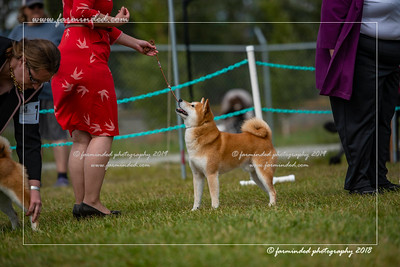 D75_4805-12x18-Dog_Show-W