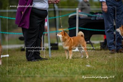 D75_4807-12x18-Dog_Show-W
