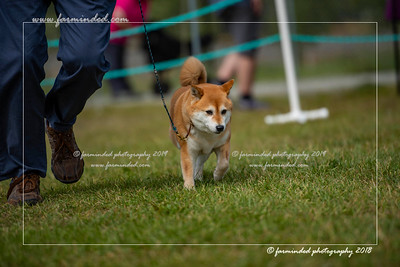 D75_4801-12x18-Dog_Show-W