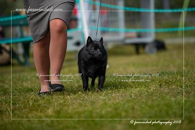 D75_4747-12x18-Dog_Show-W