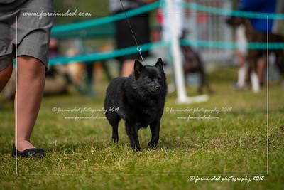 D75_4732-12x18-Dog_Show-W