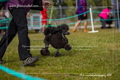 D75_4694-12x18-Dog_Show-W