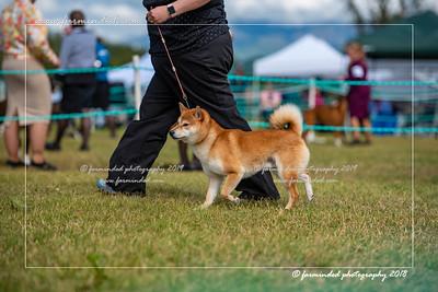 D75_4789-12x18-Dog_Show-W