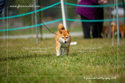 D75_4795-12x18-Dog_Show-W