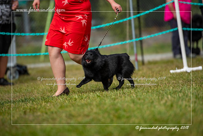 D75_4739-12x18-Dog_Show-W