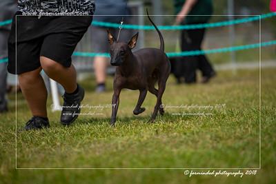 D75_4754-12x18-Dog_Show-W