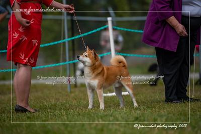 D75_4814-12x18-Dog_Show-W