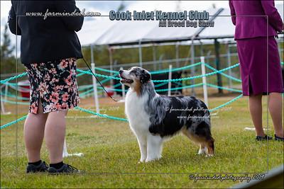 DS5_0036-12x18-07_2019-CIKC-Dog_Show-W