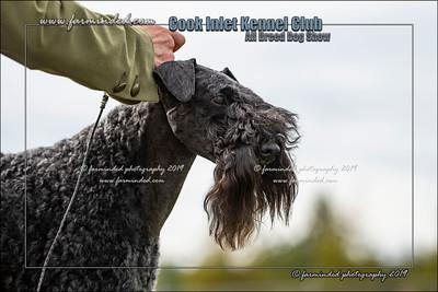 DS5_0015-12x18-07_2019-CIKC-Dog_Show-W