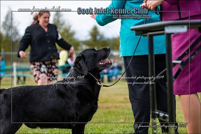 DS5_9951-12x18-07_2019-CIKC-Dog_Show-W