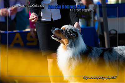 DS5_1127-12x18-06_2019-AKC Dog Show-W