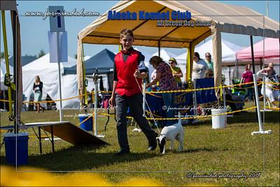 DS5_7133-12x18-06_2019-AKC Dog Show-W