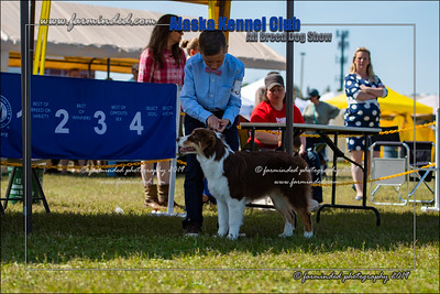 DS5_7191-12x18-06_2019-AKC Dog Show-W