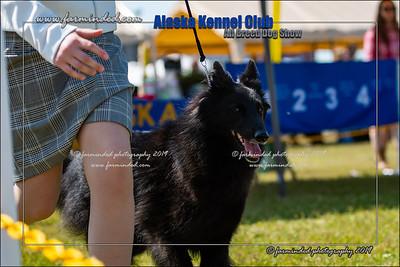 DS5_7117-12x18-06_2019-AKC Dog Show-W