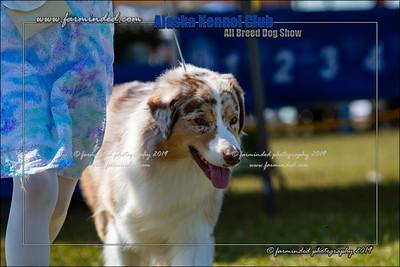 DS5_7221-12x18-06_2019-AKC Dog Show-W