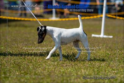 DS5_7142-12x18-06_2019-AKC Dog Show-W