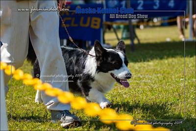 DS5_7123-12x18-06_2019-AKC Dog Show-W
