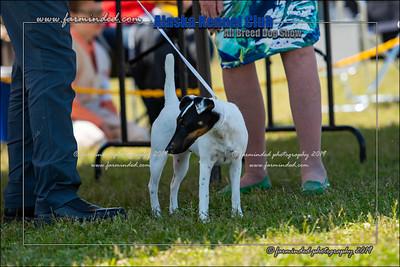 DS5_7134-12x18-06_2019-AKC Dog Show-W