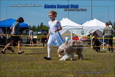 DS5_7216-12x18-06_2019-AKC Dog Show-W