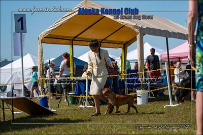 DS5_7248-12x18-06_2019-AKC Dog Show-W