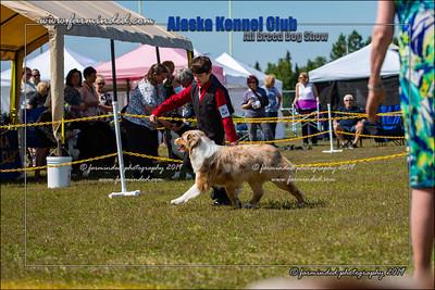 DS5_7144-12x18-06_2019-AKC Dog Show-W