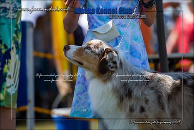 DS5_7213-12x18-06_2019-AKC Dog Show-W
