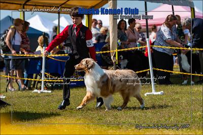 DS5_7149-12x18-06_2019-AKC Dog Show-W