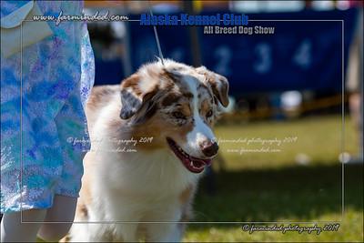 DS5_7222-12x18-06_2019-AKC Dog Show-W