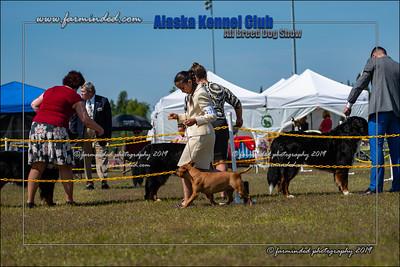 DS5_7241-12x18-06_2019-AKC Dog Show-W