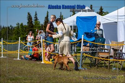 DS5_7231-12x18-06_2019-AKC Dog Show-W