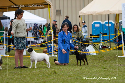 DS5_6871-12x18-06_2018-Dog Show- AKC-Day 2-W