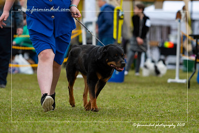 DS5_6752-12x18-06_2018-Dog Show- AKC-Day 2-W