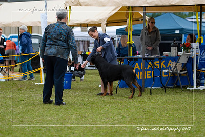 DS5_6756-12x18-06_2018-Dog Show- AKC-Day 2-W