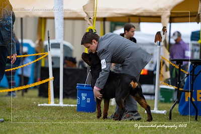 DS5_6778-12x18-06_2018-Dog Show- AKC-Day 2-W