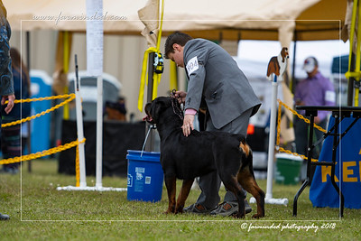 DS5_6775-12x18-06_2018-Dog Show- AKC-Day 2-W