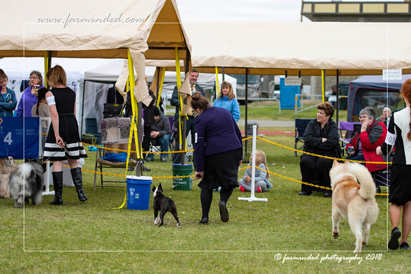 DS5_6730-12x18-06_2018-Dog Show- AKC-Day 2-W