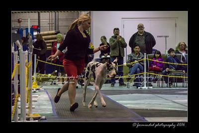 DSC06233-12x18-01_2016-Dog_Show-W_1