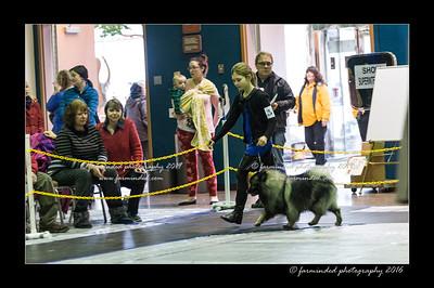 DSC_2432-12x18-01_2016-Dog_Show-W