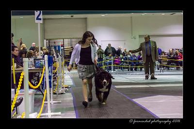 DSC06173-12x18-01_2016-Dog_Show-W_1