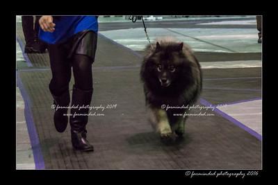 DSC06156-2-12x18-01_2016-Dog_Show-W_1