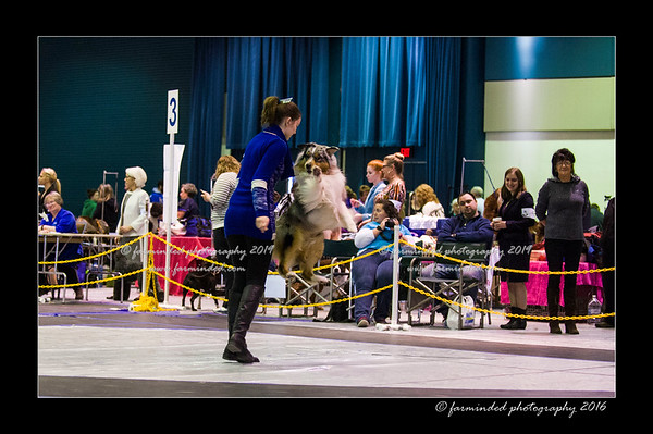 01/31/2016 - Kenai Kennel Club and Alaska Kennel Club Show