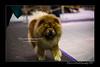 DSC_4364-2-12x18-01_2016-Dog_Show-W