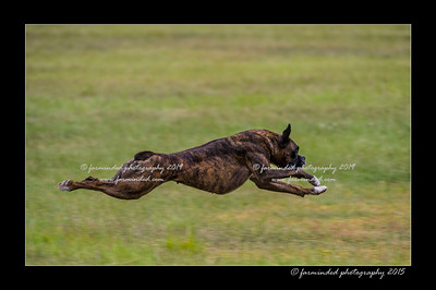 2015 - AFSA ALL-Breed Lure Coursing Trial