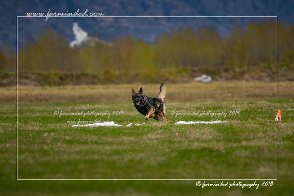 2018 - 05/12 - lure coursing