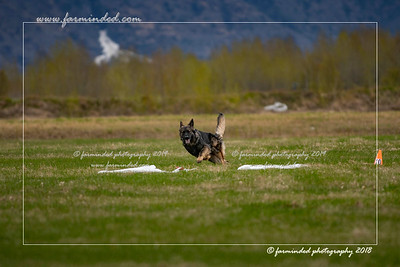 2018 -  05/12 lure coursing
