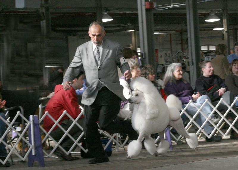 CH. DE LA PASSION EASY COME EASY GO<br /> Standard Poodle