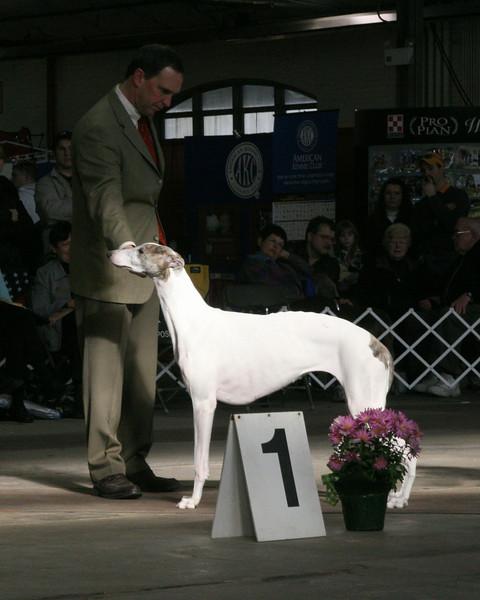 CH. HEWLY HILTON<br /> Greyhound