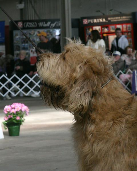 CH. SCENTASIA'S SHAKE RATTLE N ROLL<br /> Otterhound