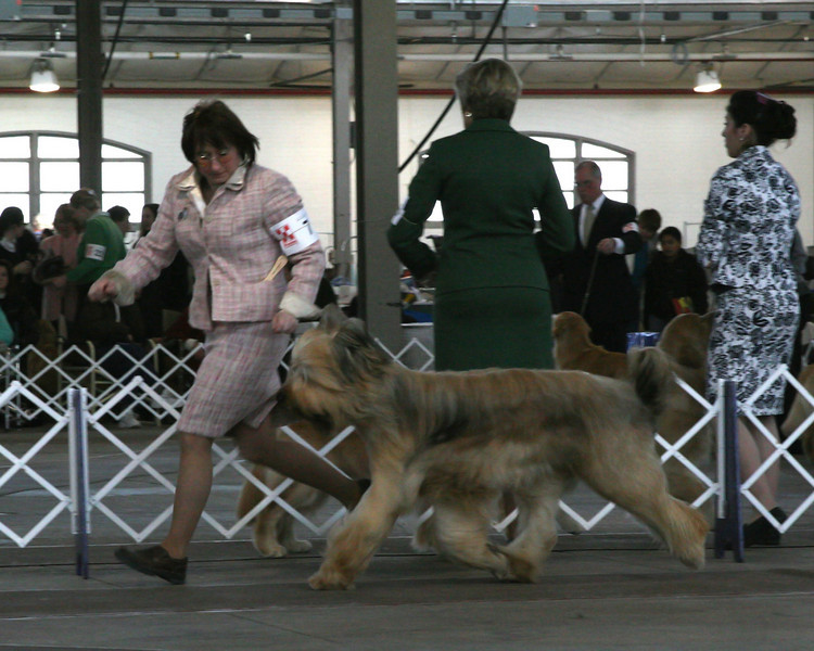COPPER DUSTS COACH HAYDEN FOX<br /> Briard