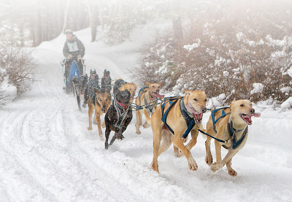 Sled Dog Team 9 Open 2014